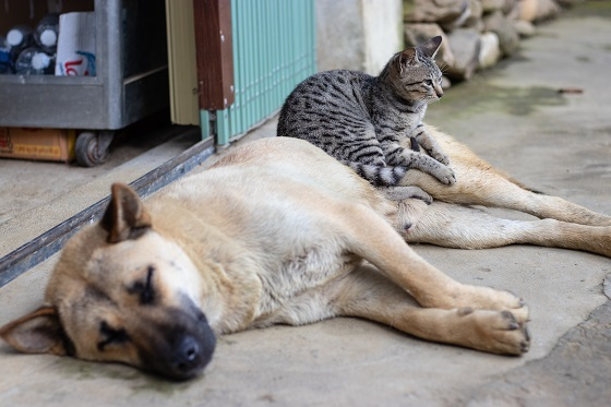 kat beter dan een hond - 10 redenen waarom katten beter zijn dan honden