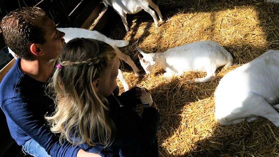 Ridammerhoeve geitenboerderij low budget en gratis uitjes in Noord Holland