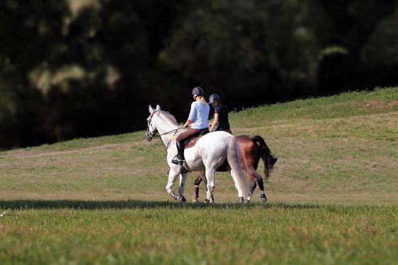 Benodigdheden paardrijden