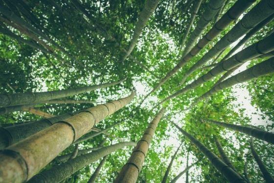 Bamboe kleding populair