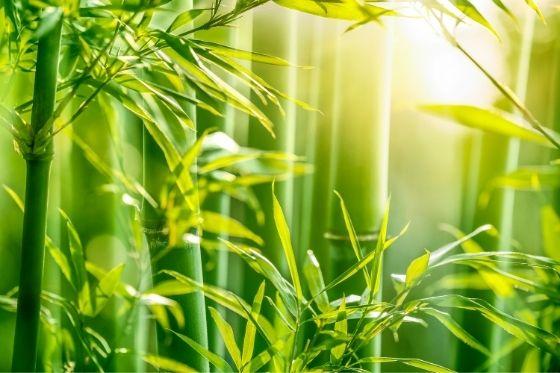 Kleding van bamboe redenen voor populariteit
